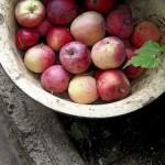 アサヒフード若摘みりんごポリフェノール980円モニターが気になる。