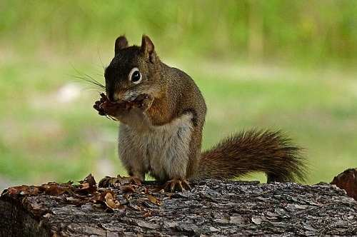 squirrel-5692