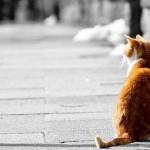猫背がラクになっている人は危ない!