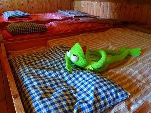 frog-51868