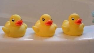 rubber-duckies-146