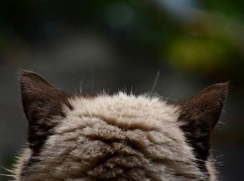 cat-746311