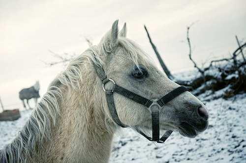 horse-181310
