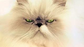 cat-694407