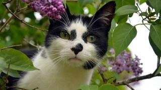 cat-830402