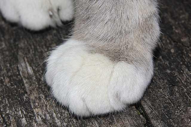cat-379118