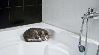 cat-1052060