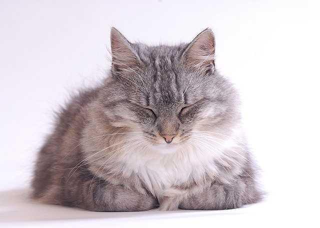 cat-555784