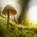 肌トラブルの影に真菌