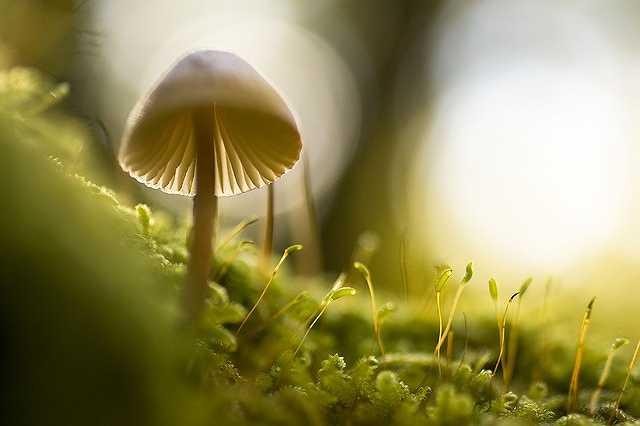 nature-768563