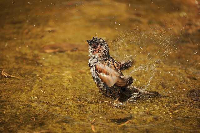 sparrow-1154182