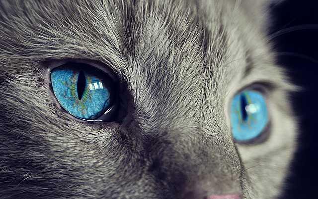 cat-1285634