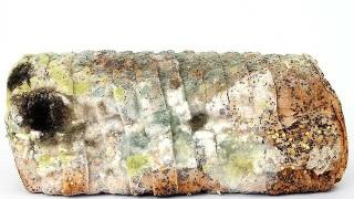 mold640