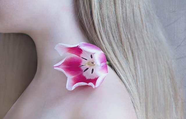 tulip-1309666
