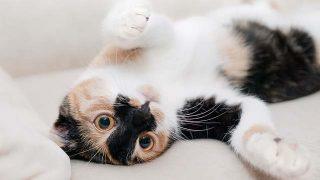 cat-649164