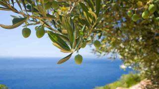 tree-1754051