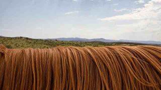 horse-419740