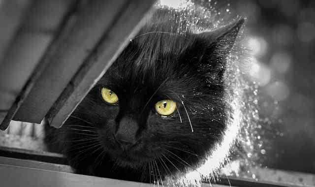 cat-2163113