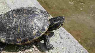 turtle-793491