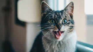 cat-1986499