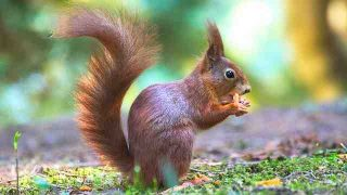 squirrel-2187362