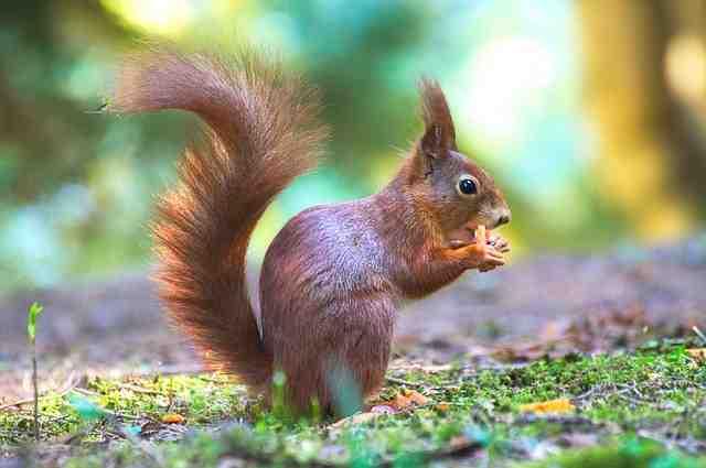 squirrel-2187362