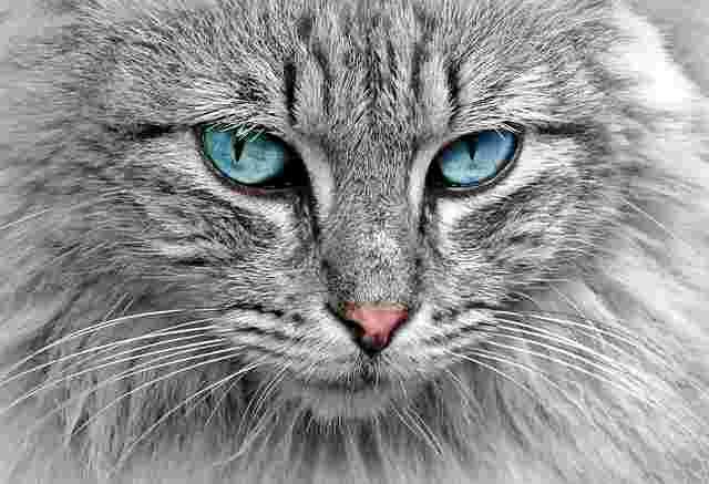 cat-1045782