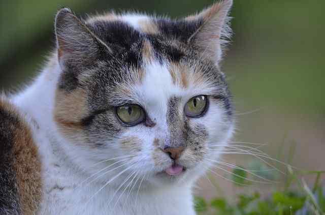 cat-2363808