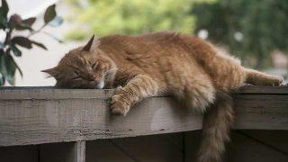 cat-2363938