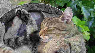 cat-2395102