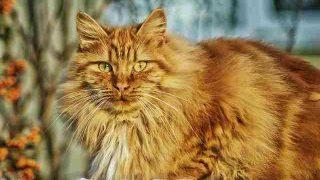 cat-67345