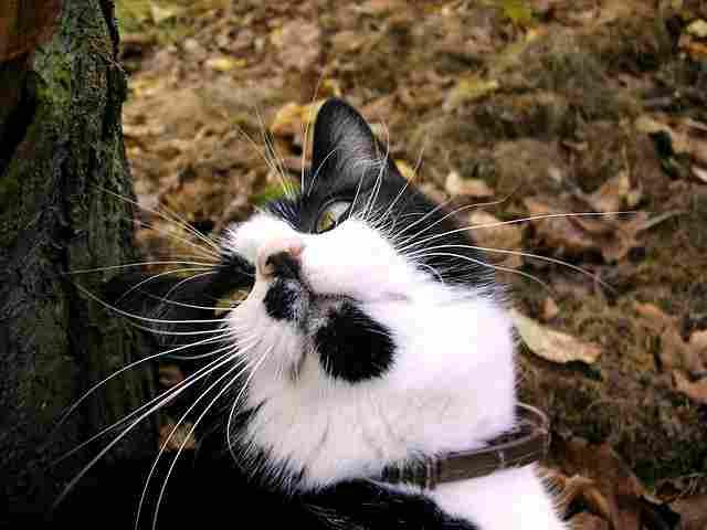 cat-929988