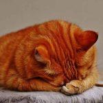 睡眠負債の正しい改善方法