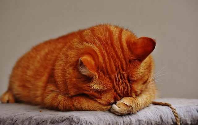 cat-1675428