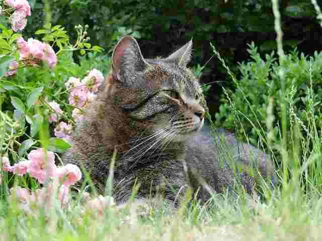 cat-2424384