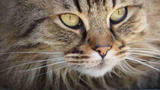 cat-1393075