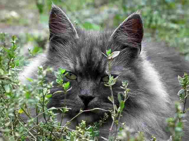 cat-194858
