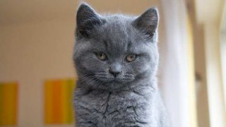 cat-2428858
