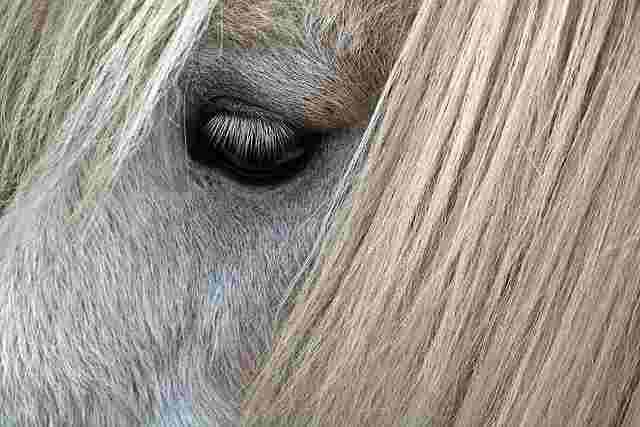 horse-2272415