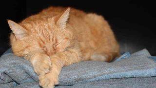 cat-2513701