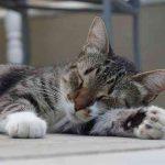 8時間横になってれば、そのうち良質な睡眠がとれるようになると思ってたけど