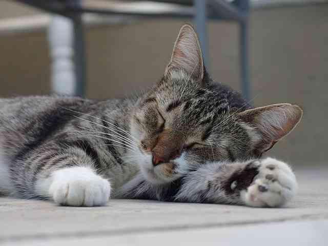 cat-2716805