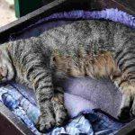 規則正しい生活と自由な睡眠