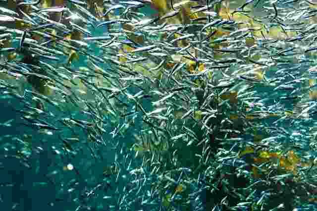 fish-2463531
