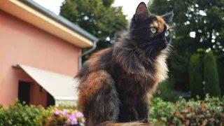 cat-2742106