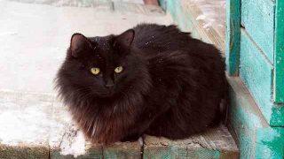 black-cat-2233386