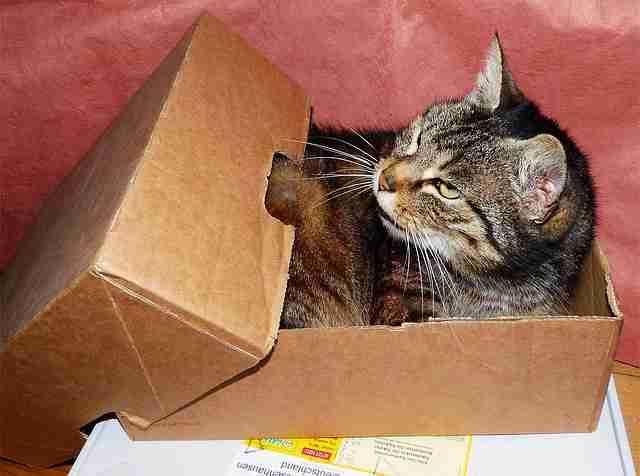 cat-1529520
