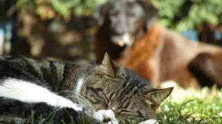 animals-3219619