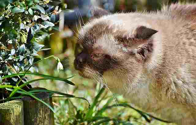 cat-3256641
