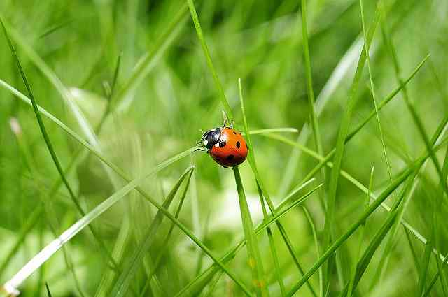 ladybug-796481